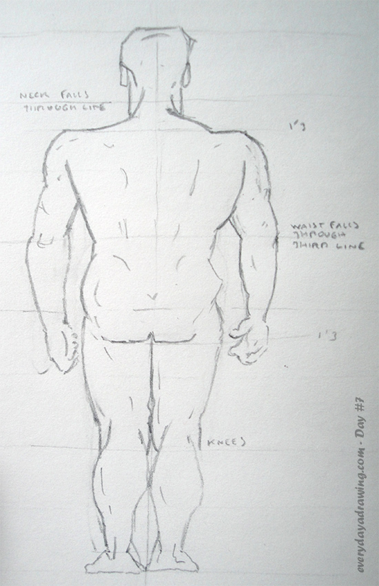 Pencil Drawing of the Male Figure Proportions viewed from the back
