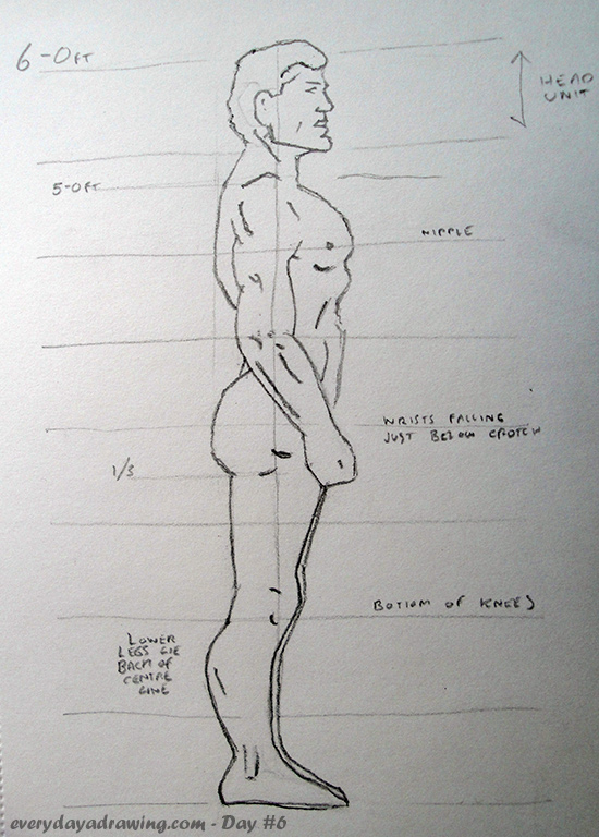Figure Drawing Proportions Side View