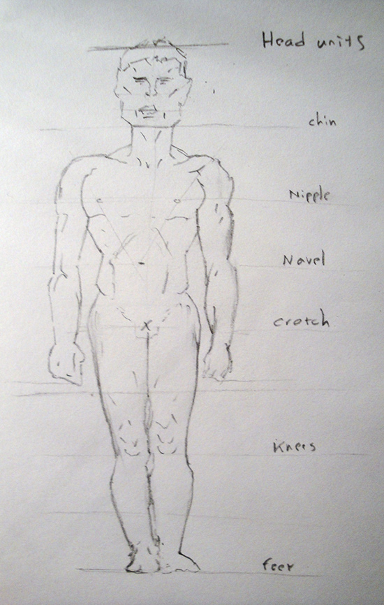 Male Figure Proportions