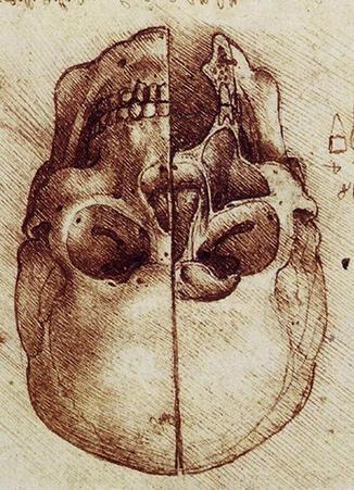 leonardo-davinci-skull-upside-down-reference