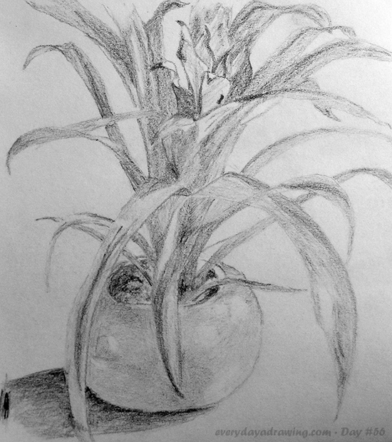 Pencil Drawing of a Potted Plant