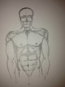 Torso with muscles sketched in.