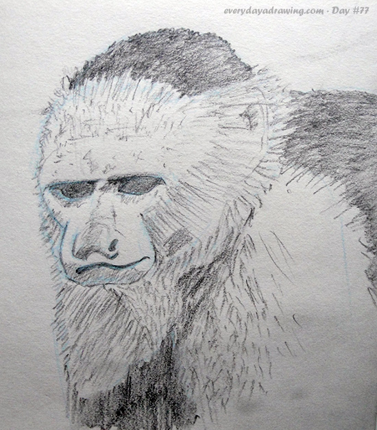 Pencil Drawing of a Capuchin Monkey