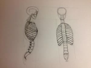 Spine and rib cage side and back