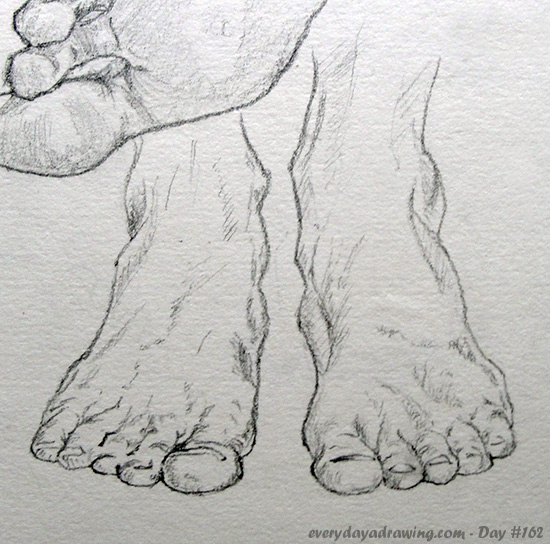 Drawing of feet from the front