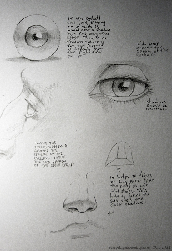 Notes on how to draw the eyes and nose