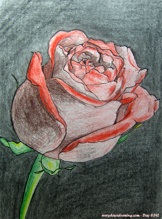 Drawing of a rose in colour